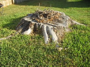 tree stump with kindling on it