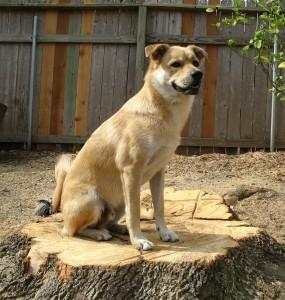 dog sitting on tree stump