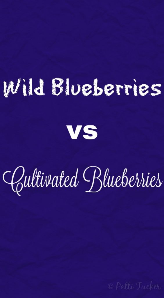 What I've Learned: Wild Blueberries vs Cultivated Blueberries