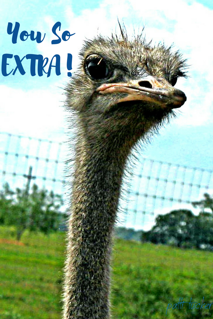 text graphic with ostrich face